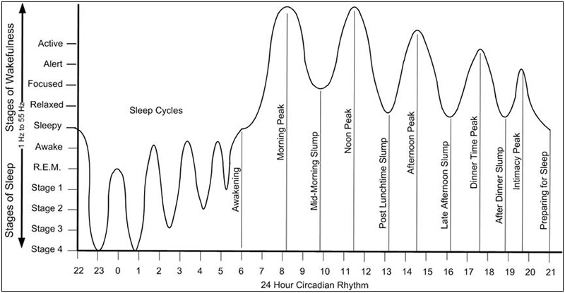 Circadium Rhythm Sleep Stages Grapic